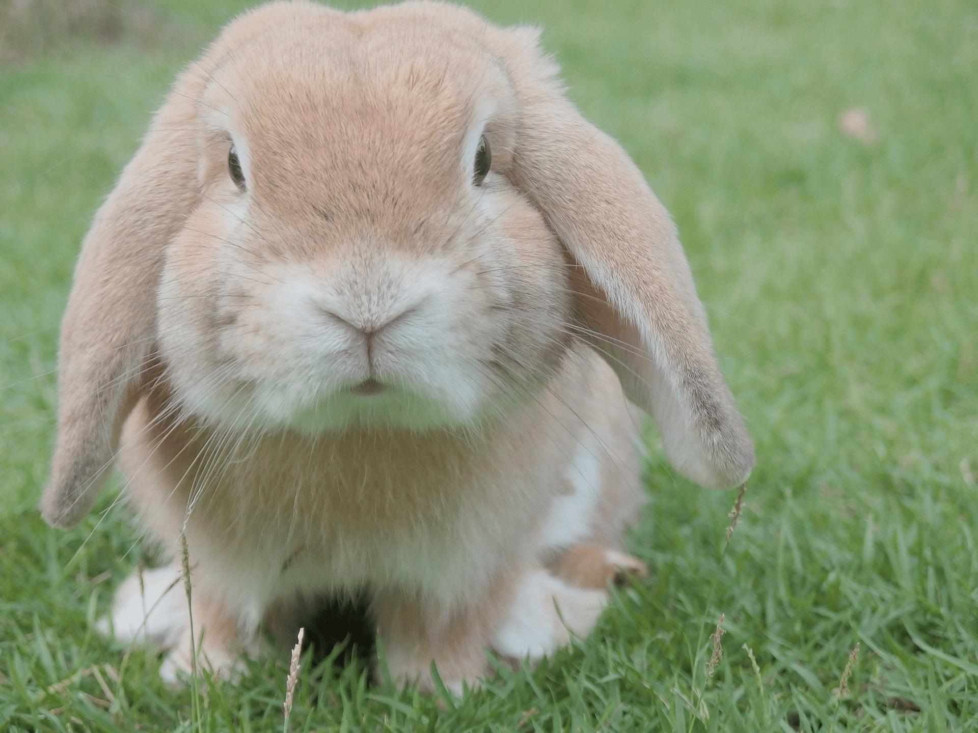 Månedsbokse til kaniner
